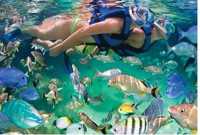 Snorkeling At The Aquarium Of The World (11 Am)-256