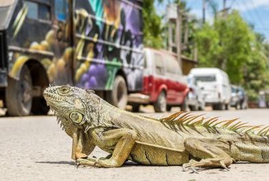Tours in Puerto Vallarta Sayulita Lifes A Beach