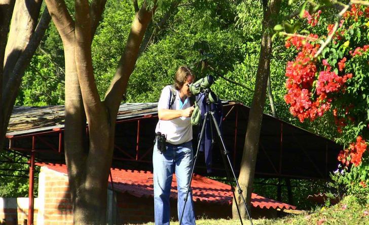 Bird Watching Tropical And Botanical Garden
