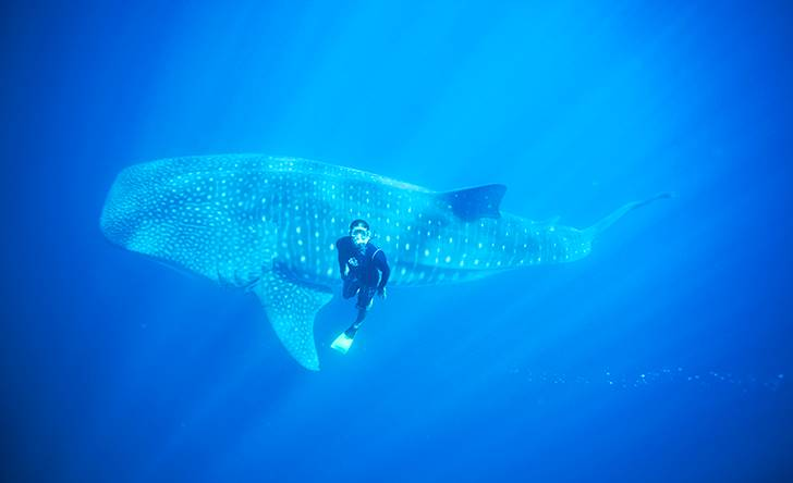 Swimming With Whale Shark-146