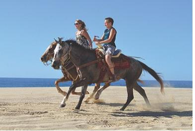 Los Cabos Activities and Sightseeing - Beach  Desert Ride Beginners 2 Hrs
