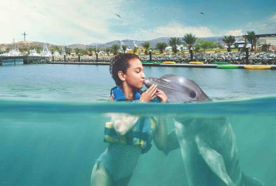 Los Cabos Activities and Sightseeing - Dolphin Encounter