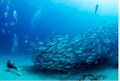 Los Cabos Activities and Sightseeing - Cabo Pulmo 2 Tank Certified Dive