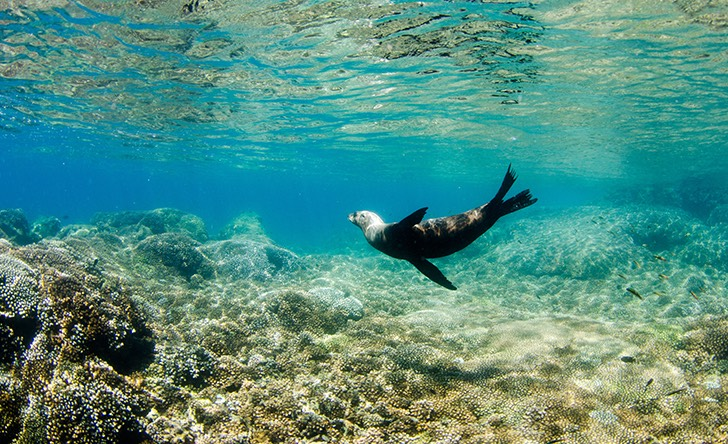 Cabo Pulmo Snorkel Expedition