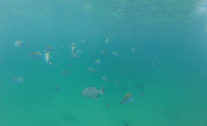 Deluxe Snorkeling At The Aquarium Of The World - Lunch Included