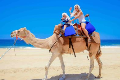 Los Cabos Activities and Sightseeing - Outback And Camel Safari Tour