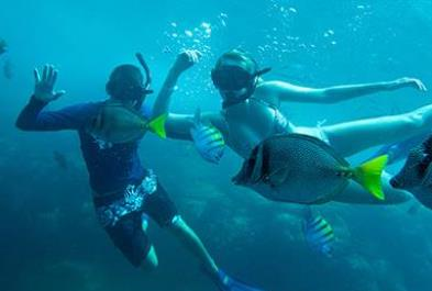 Los Cabos Activities and Sightseeing - Snorkel  Sea Adventure