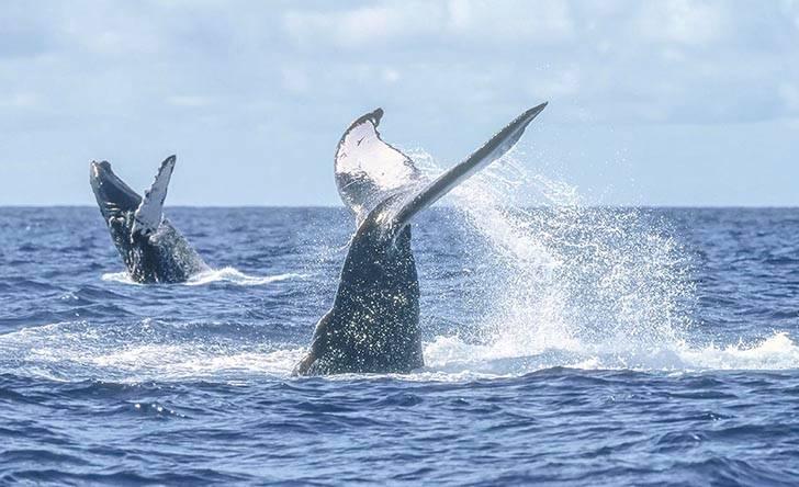 Whale Photo Safari-51