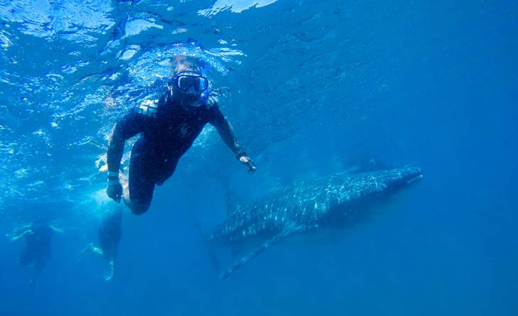 Whale Shark Encounter-52