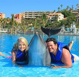 Dolphin Encounter By Cabo Dolphins