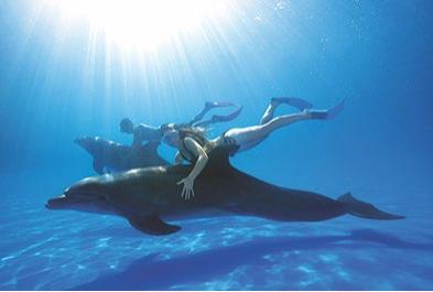 Los Cabos Activities and Sightseeing - Dolphin Signature Swim