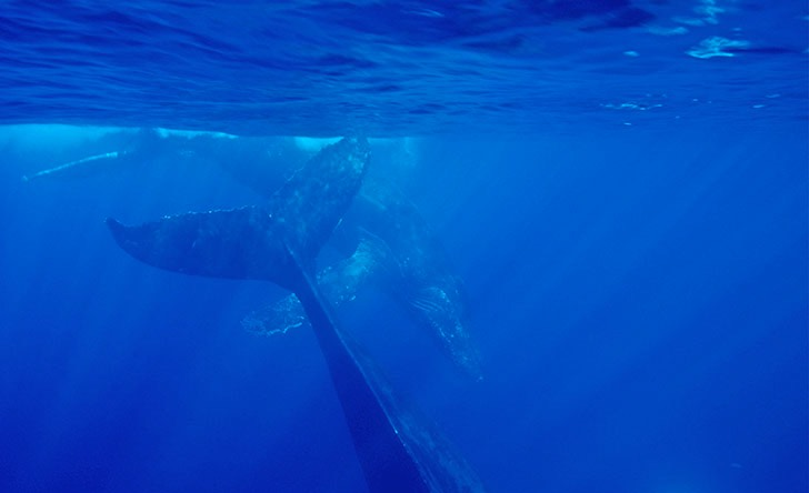 Whale Watching-77