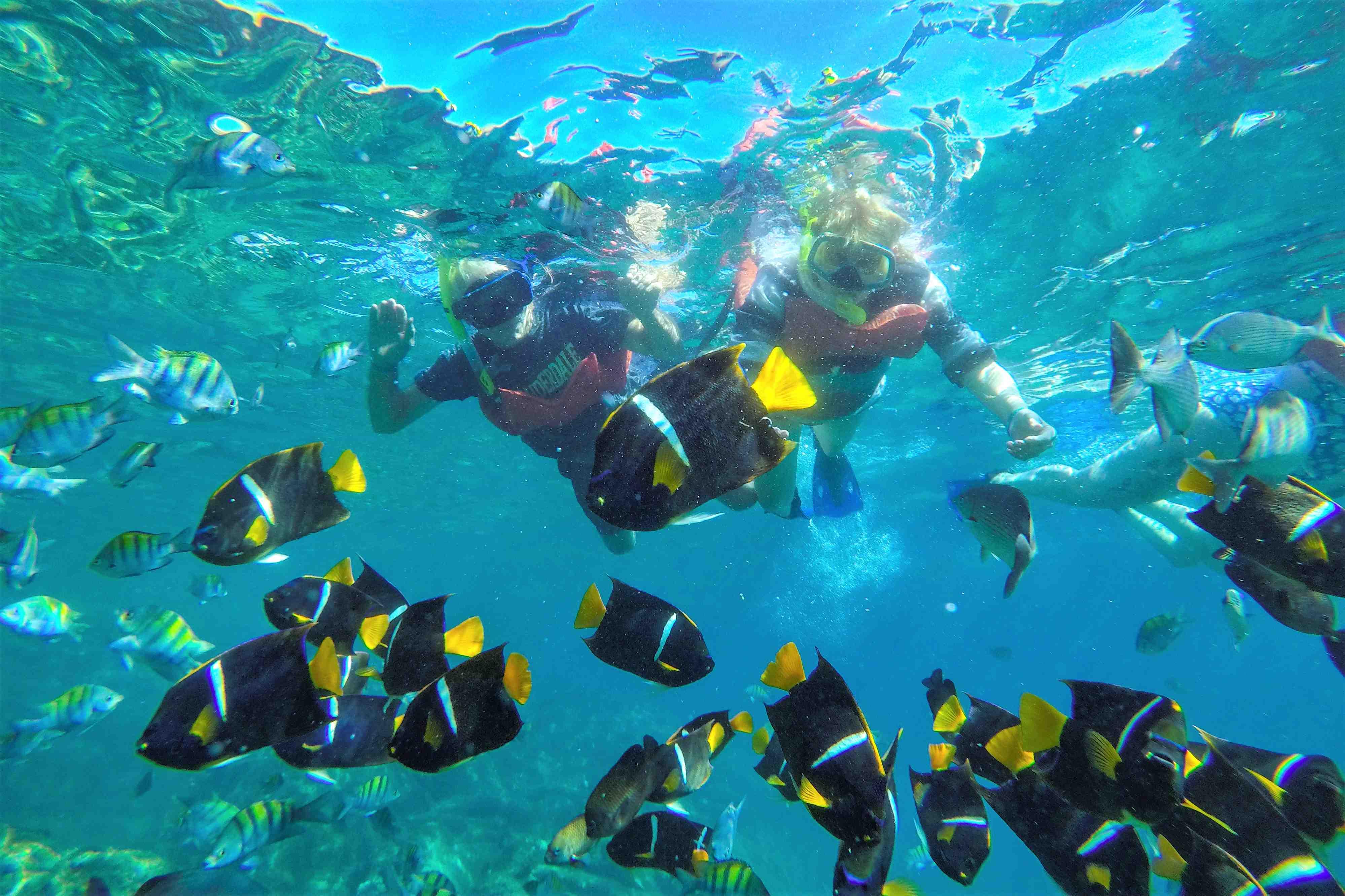 Las Caletas Beach Hideaway - Last Minute Tours in Puerto Vallarta