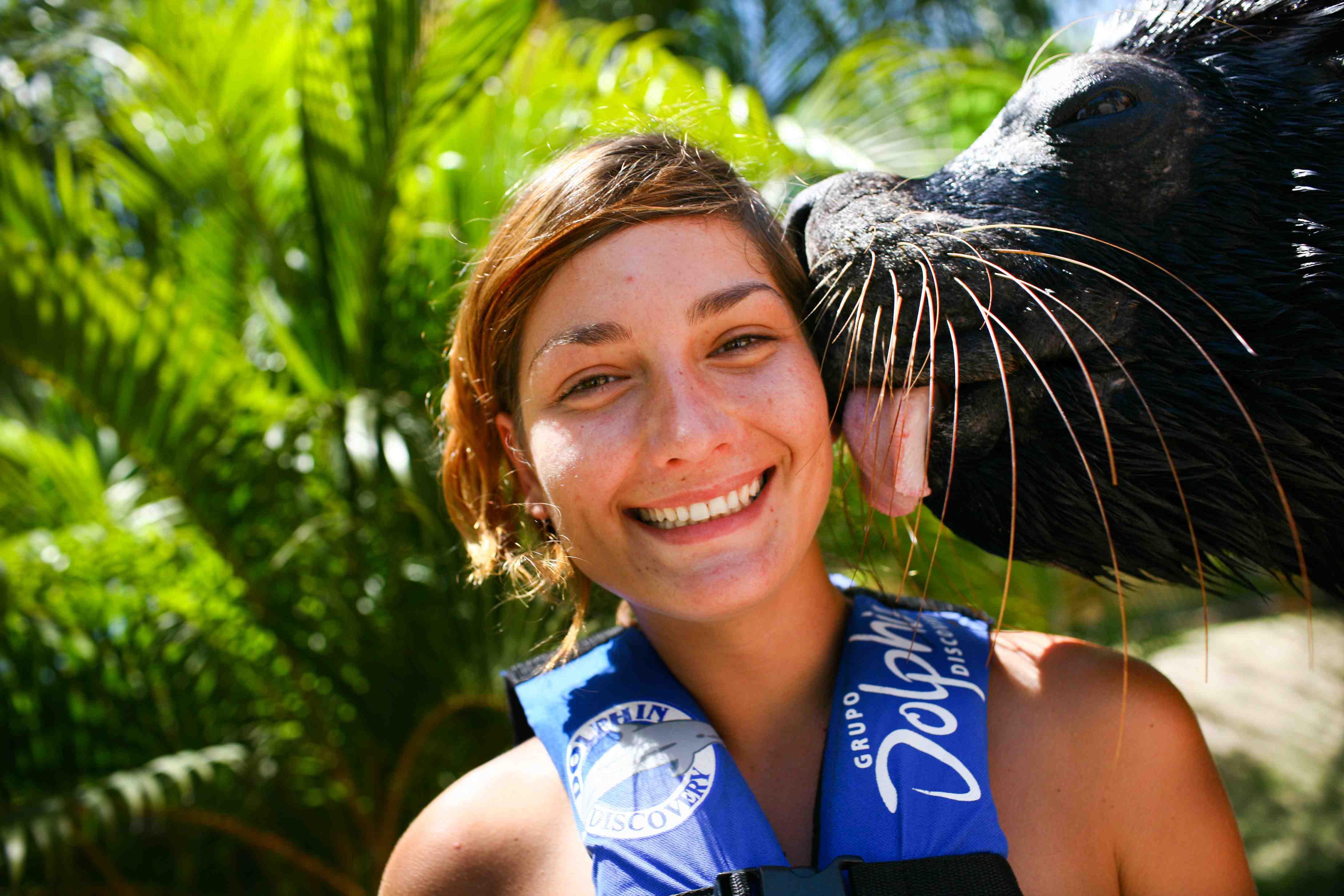 Sea Lions Encounter - Last Minute Tours in Puerto Vallarta
