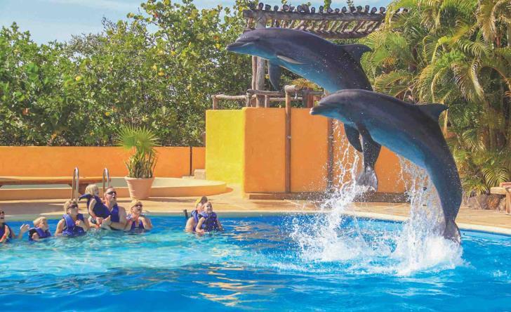 Dolphin Connection - Last Minute Tours in Puerto Vallarta
