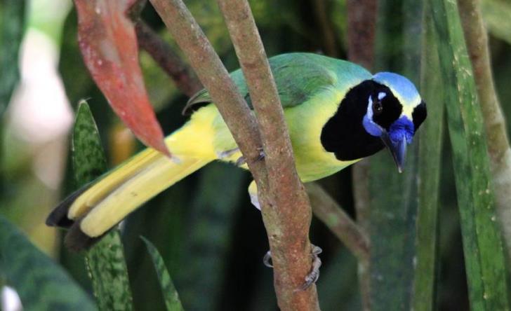 Bird Watching Tropical And Botanical Garden - Last Minute Tours in Puerto Vallarta