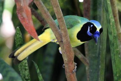 Bird Watching Tropical And Botanical Garden - Last Minute Tours in Puerto Vallarta