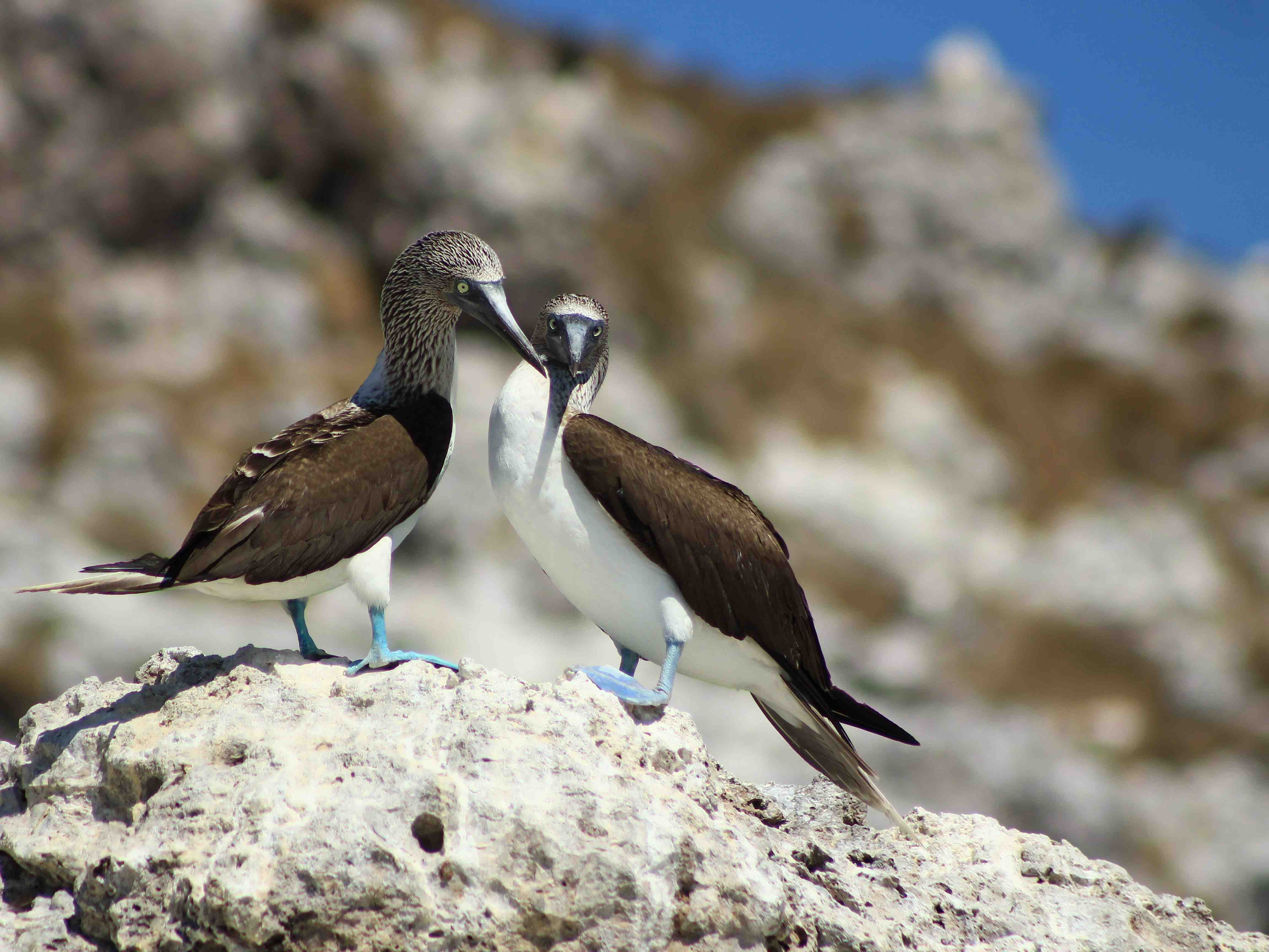 Marietas Eco-discovery - Last Minute Tours in Puerto Vallarta