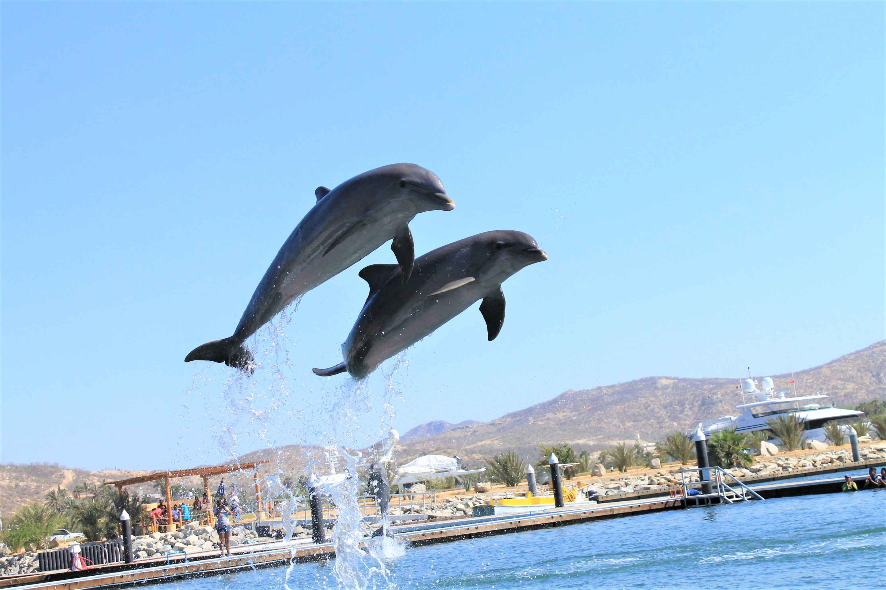 Dolphin Encounter - Last Minute Tours in Los Cabos