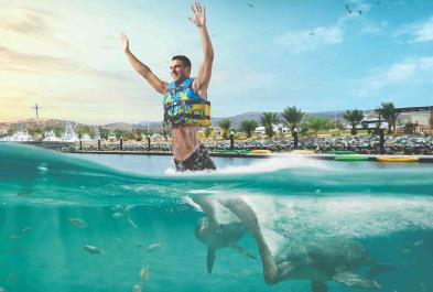 Dolphin Royal Swim - Los Cabos sightseeing and activities