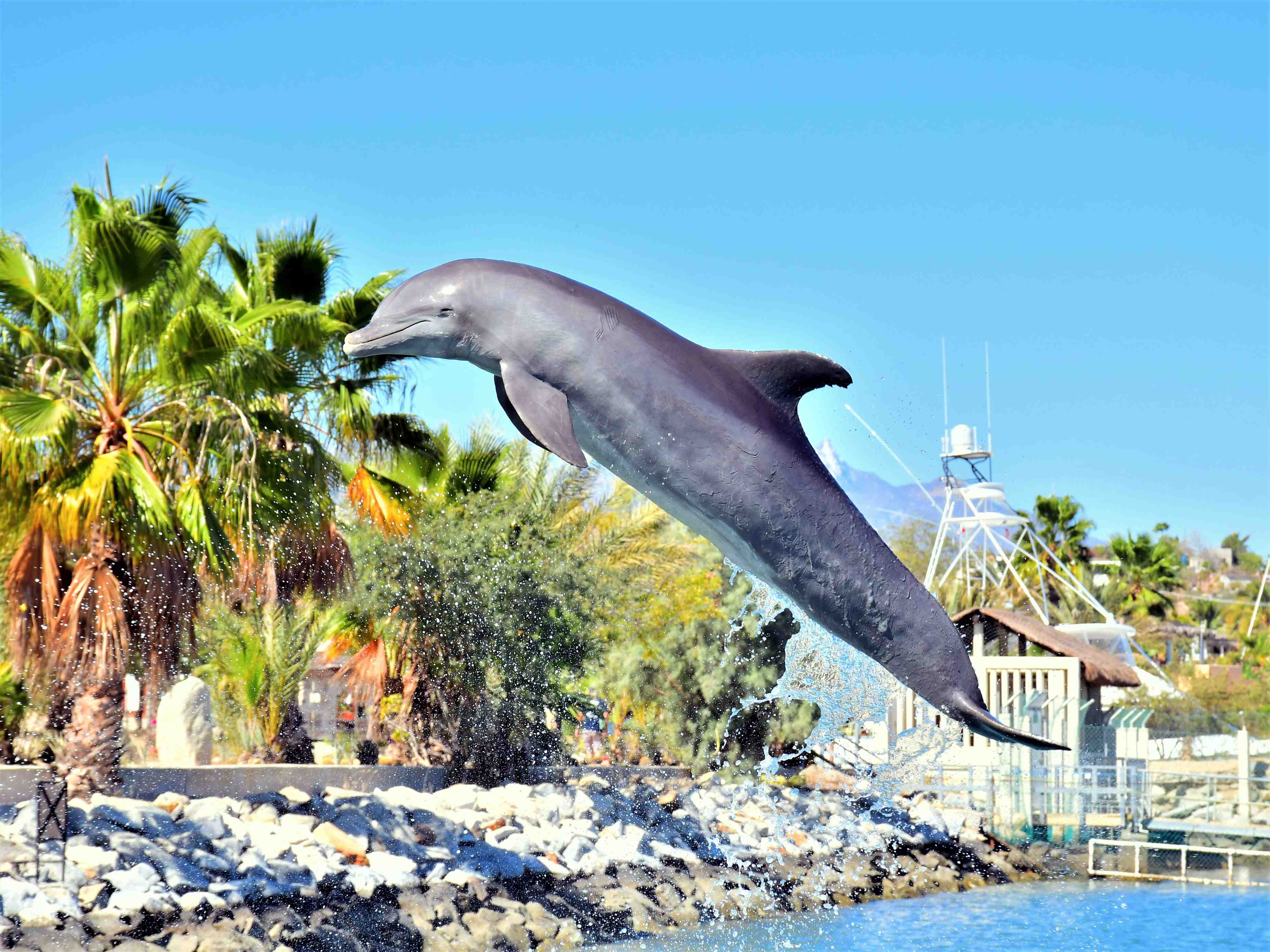 Dolphin Royal Swim - Last Minute Tours in Los Cabos