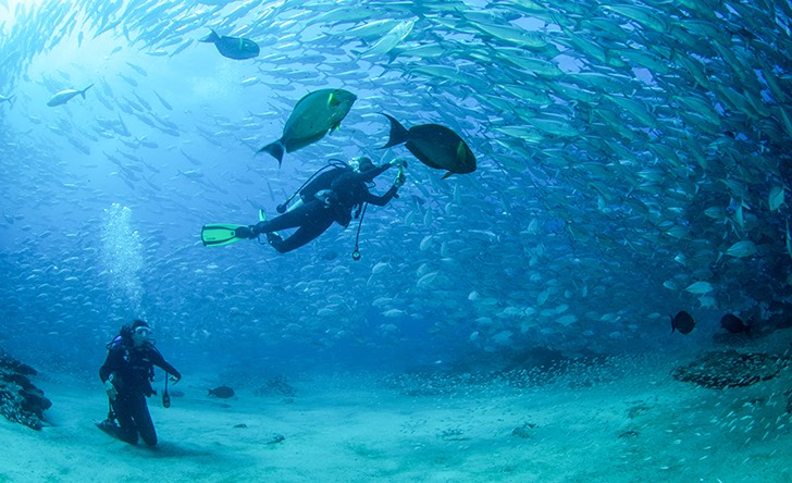 Cabo Pulmo 2 Tank Certified Dive-29 - Last Minute Tours in Los Cabos