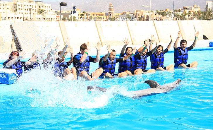 Dolphin Signature Swim - Last Minute Tours in Los Cabos