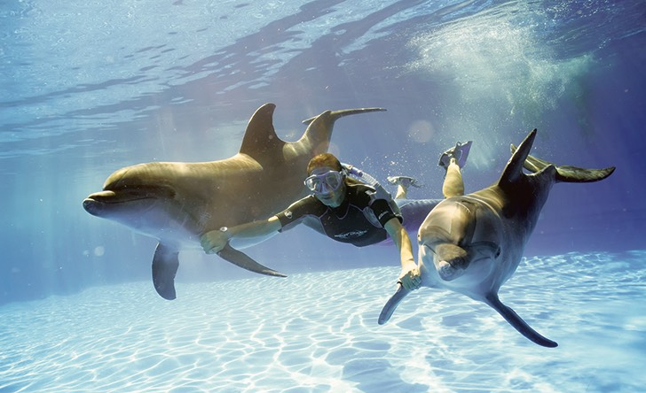 Dolphin Signature Swim - Last Minute Tours in Los Cabos