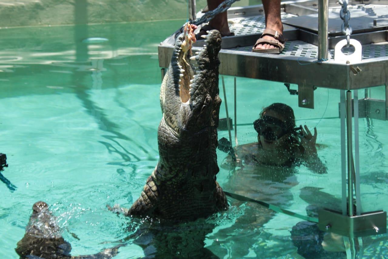 Crocodrile Cage Adventure  - Last Minute Tours in Los Cabos