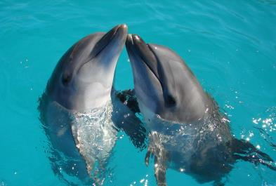 Tours in Cancún and Riviera Maya Dolphin Encounter