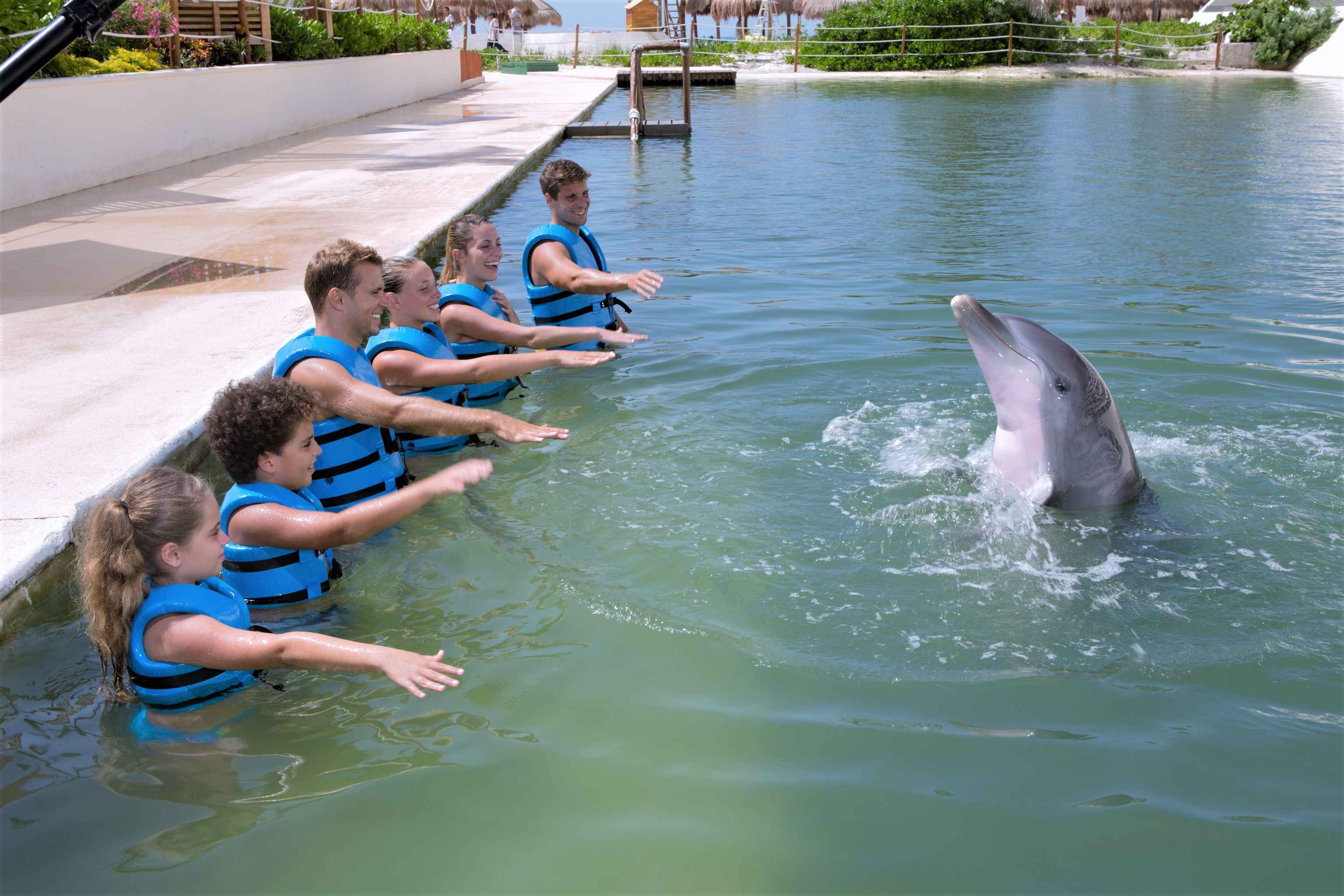 México Travel Solutions Dolphin Ride In Punta Cancun