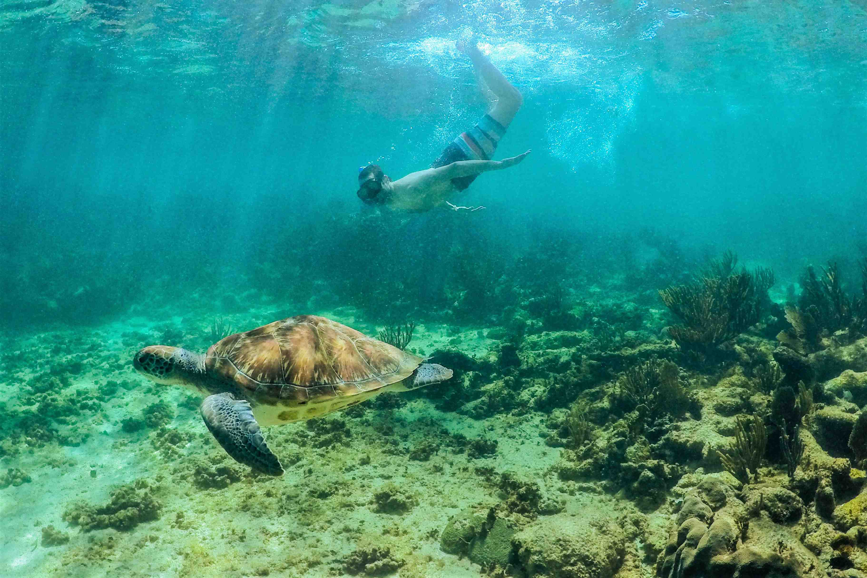 Coba And Turtle Adventure Tour - Last Minute Tours in Cancún and Riviera Maya