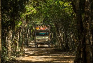 Tours in Cancún and Riviera Maya Jungla Maya
