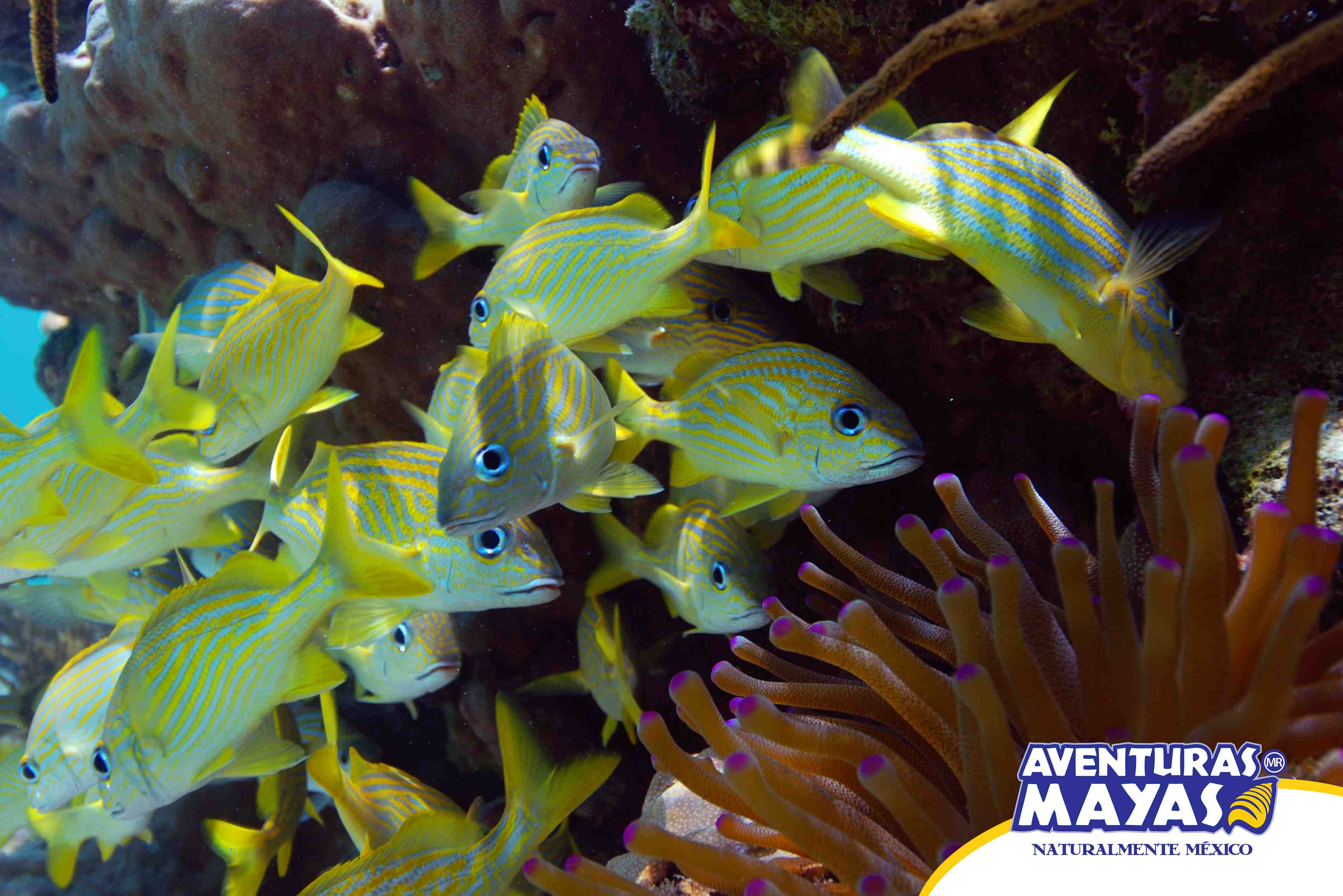 Mayan Adventure In Riviera - Last Minute Tours in Cancún and Riviera Maya
